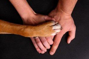 about us pet insurance
