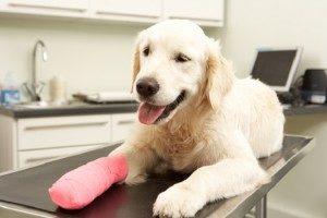 Pet Insured on Dog
